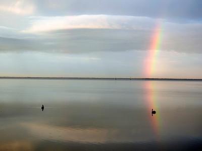 2_29_20 Pelican in the Rainbow