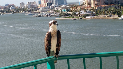 2_18_20 Osprey On Balcony