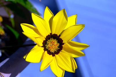 1_22_20 Yellow beauty