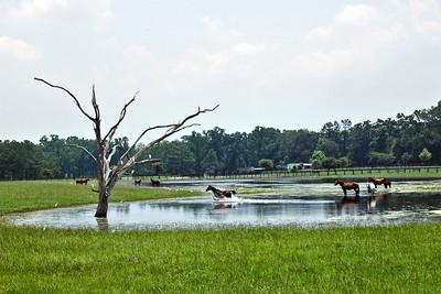 1_20_20 Florida Horse Country