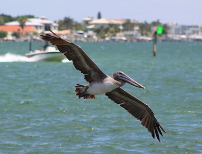 5_18_20 Pelican Fly By
