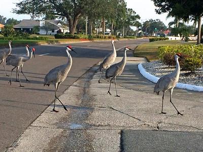 12_10_18 Strolling Sun City Center Residents