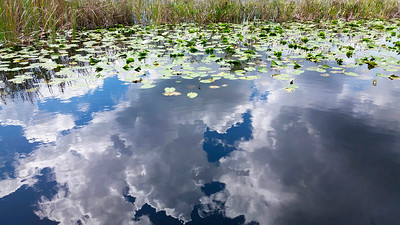 7_13_18 Lily pads and clouds on the water