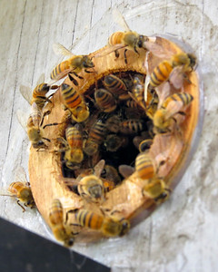 Bird House Becomes Honey Bee Home
