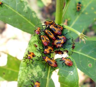 Bug Picnic