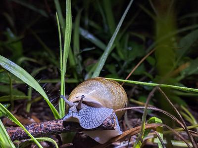 4_16_21 Snail at night