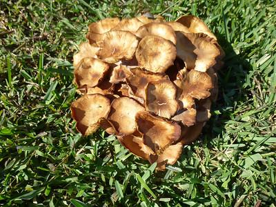 4_14_21 A bouquet of golden mushrooms