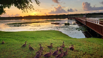 8_11_21 Beautiful Morning with All My Ducks in a Row