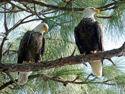 8_23_21 Eagle Pair I believe were discussing the election
