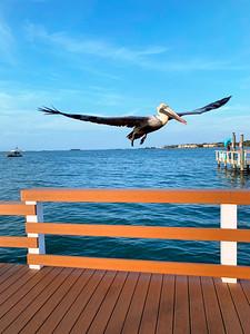 2_5_21 Pelican take-off