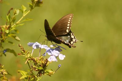 7_8_21 Butterfly