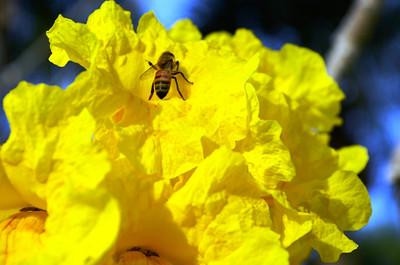 7_28_21 Bee-utiful
