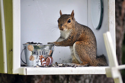 6_12_21 Willie the Squirrel