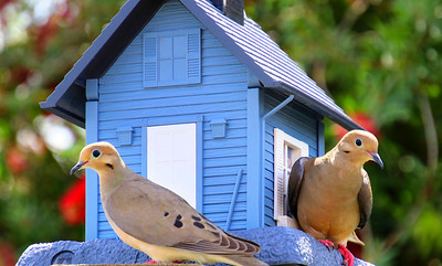 6_18_21 Sweet birds enjoying some snacks