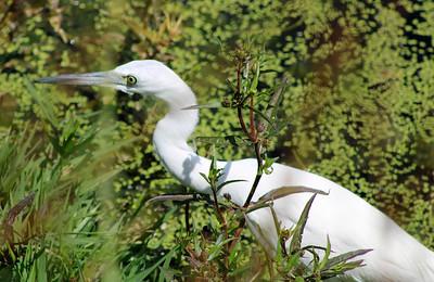 3_18_21 Bird Watching at Wall Spring Park
