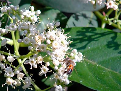 5_7_21 Honey Bee