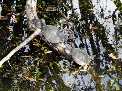 2_27_19 Turtles in the sun