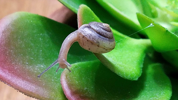 2_21_19 Snail Surveying Next Jump