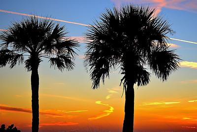 1_10_19 Sunset Palms with Chemtrails