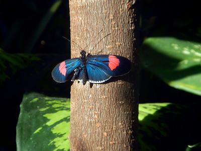 3_27_19 Butterfly on tree