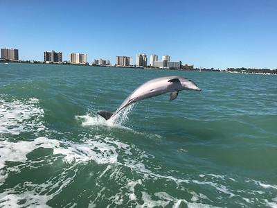 5_17_19 Fun with Dolphin