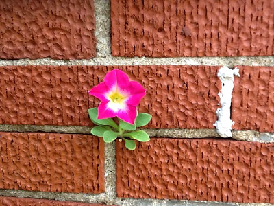 11_4_19 Flower Sprouting From Brick Wall