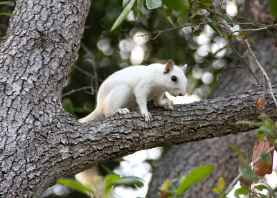 10_18_19 White Squirrel