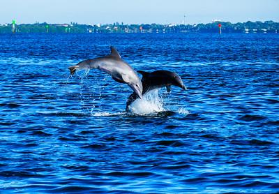 Happy Porpoises