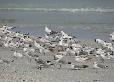 Beach Open for the Birds