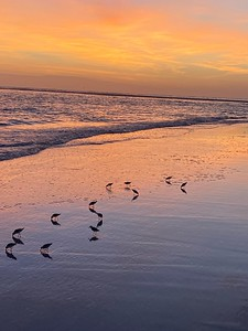 Birds on the Ft DeSoto beach at sunset