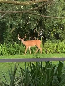 Buck visiting his neighbors