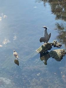 Birds off Bayshore
