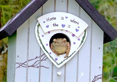 Frog In Bird House