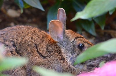 Bunny In My Garden