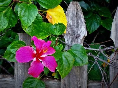 Flower at Wood Ibis Park