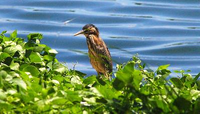 4_15_20 Seabird at Belle Vista