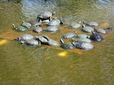 8_18_20 Turtles, Turtles, Turtles
