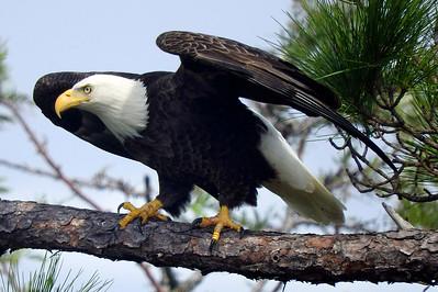 2_6_20 Eagle