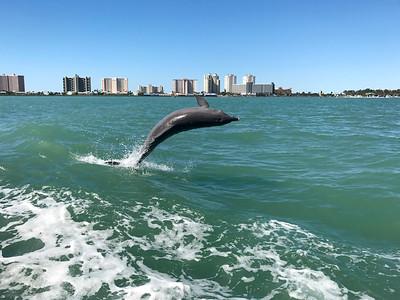 1_9_20 Dolphin Fun