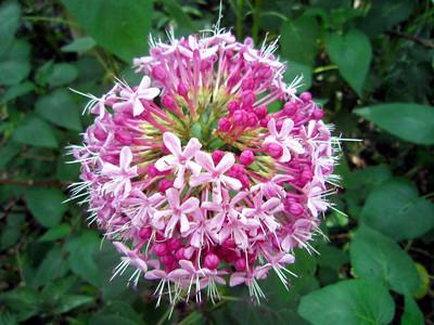 7_2_20 Flower, not a virus
