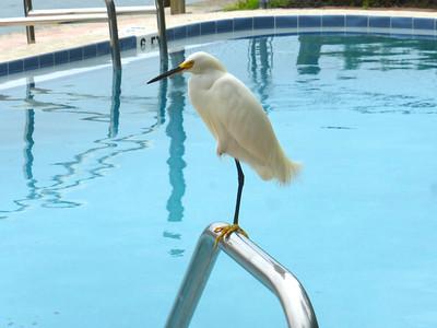 7_9_20 Yes, a one-legged jump in the pool, OK