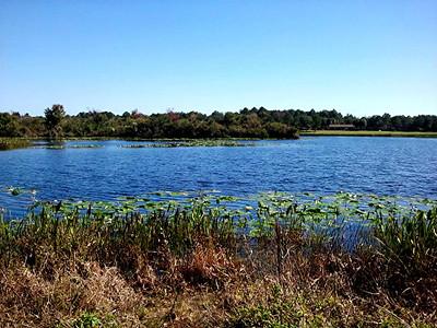 5_1_20 Beautiful day at Lake Walsingham Park