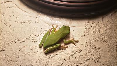 11_16_20 Frog near garage light