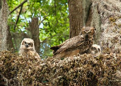 9_15_20 Owl Family