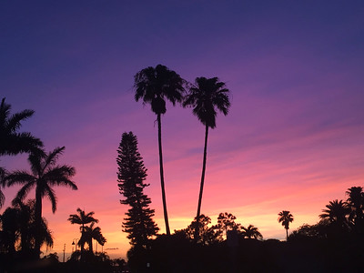 9_29_20 Palm Tree Sunset