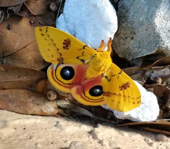 9_23_20 IO Moth has Eyes on Me