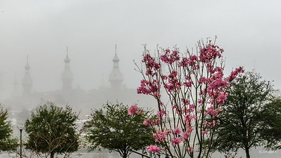 Minarets and Blossoms in Fog