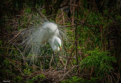 Nesting Time