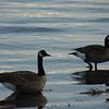 Mr & Mrs Goose...