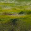 _BLS4769Marsh Grass